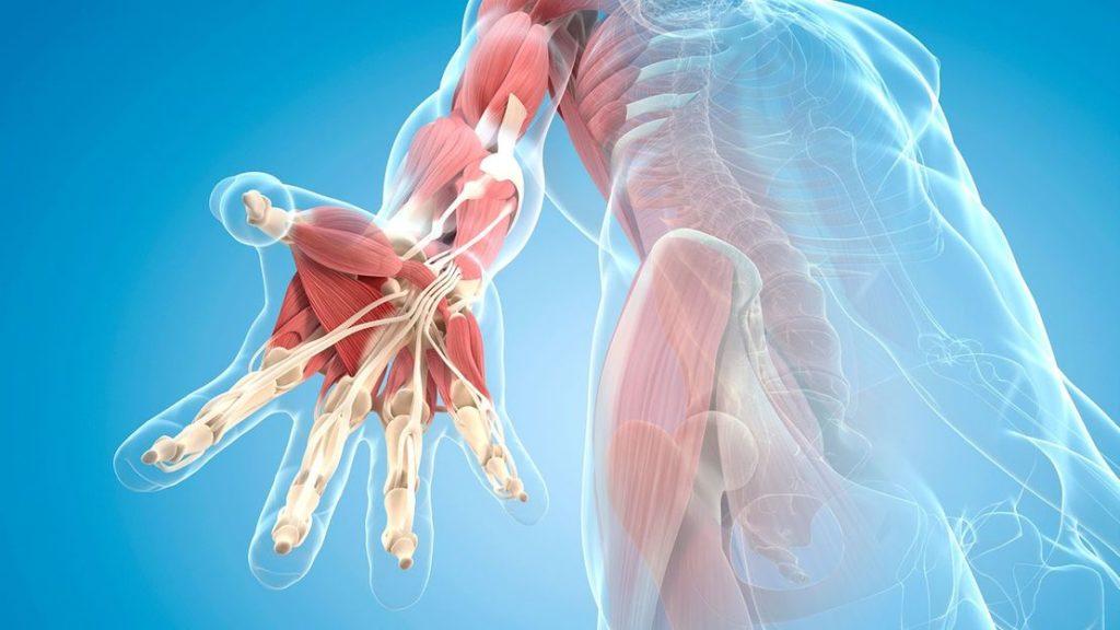 筋膜のネットワーク機能