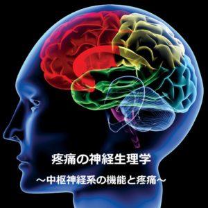 疼痛の神経生理学 中枢神経系の機能と疼痛